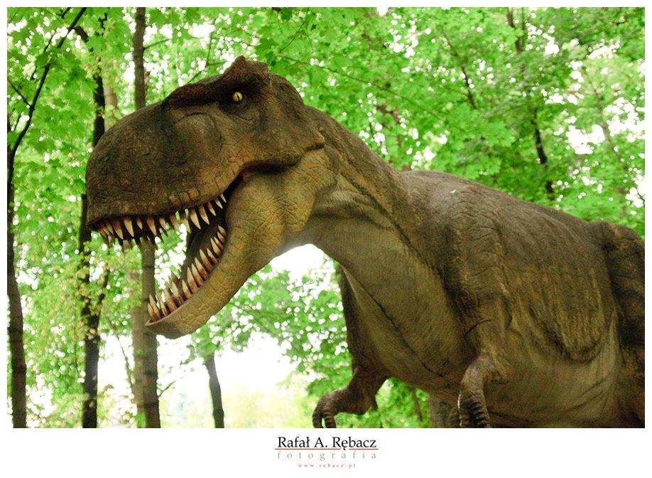dżurasik park … czyli dinozaurowo …