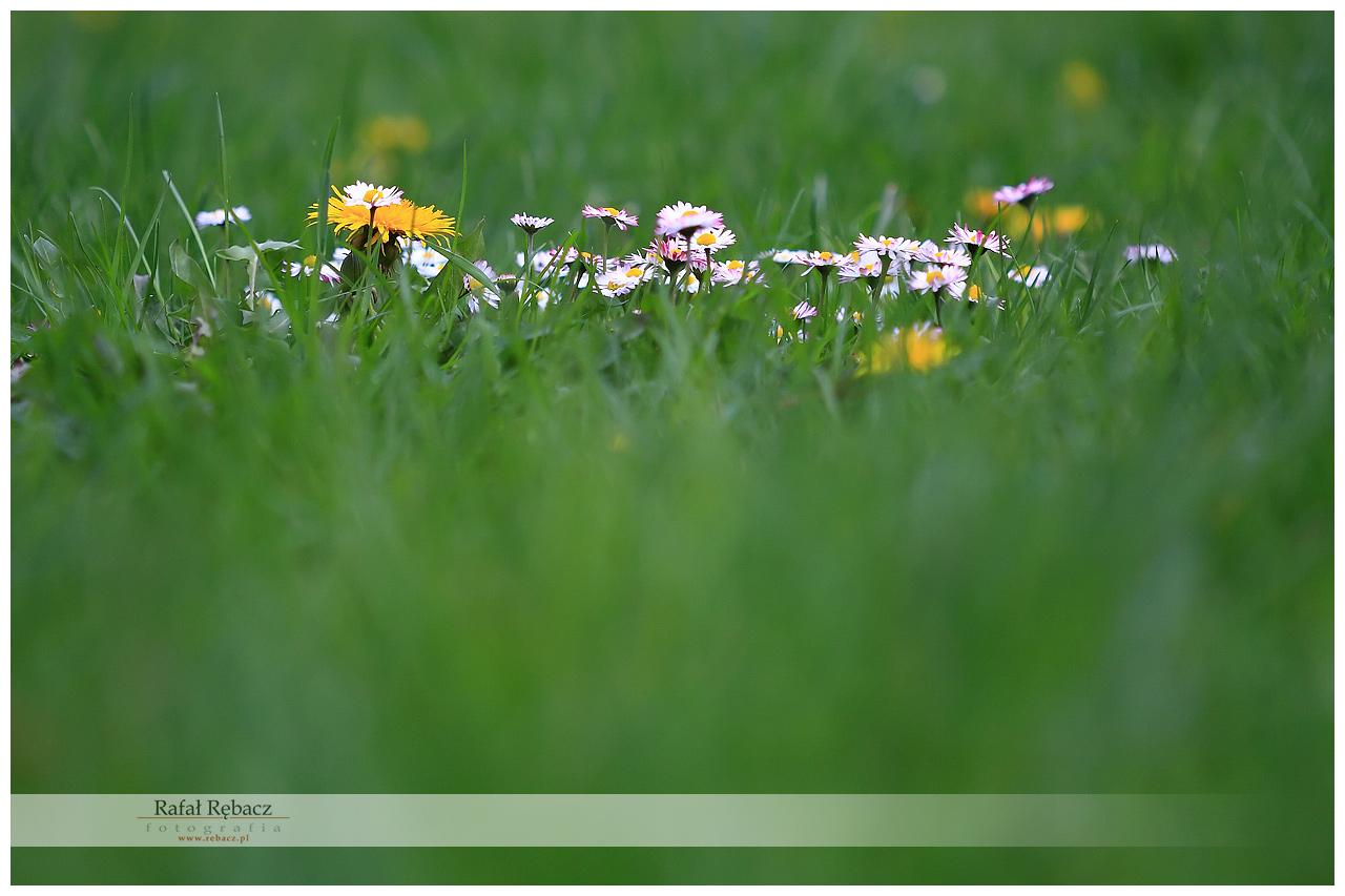 Trawnik i to co w nim wyrosło